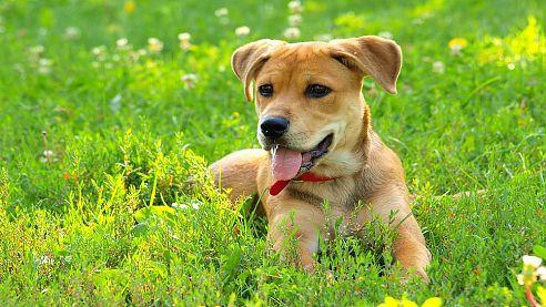 Do 31.3.2017 je nutné uhradit poplatek za psa.