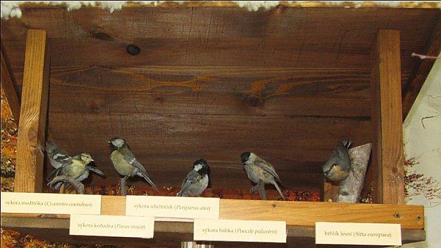 Ptáci na krmítku v naší výstavním síni KD